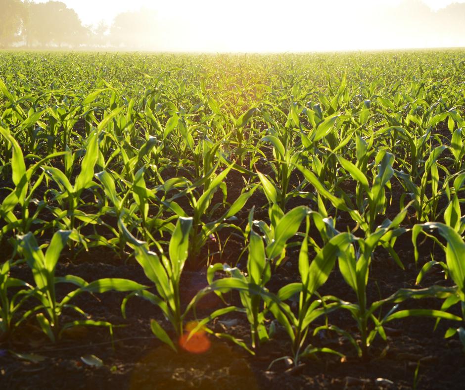 Força da agropecuária reduz efeitos da pandemia